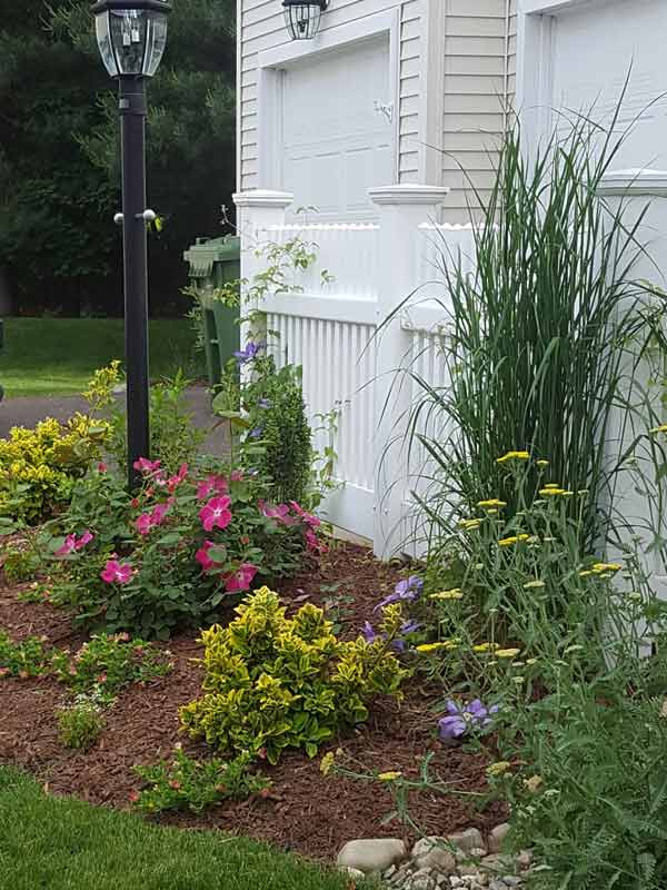 Front Plantings – Howards