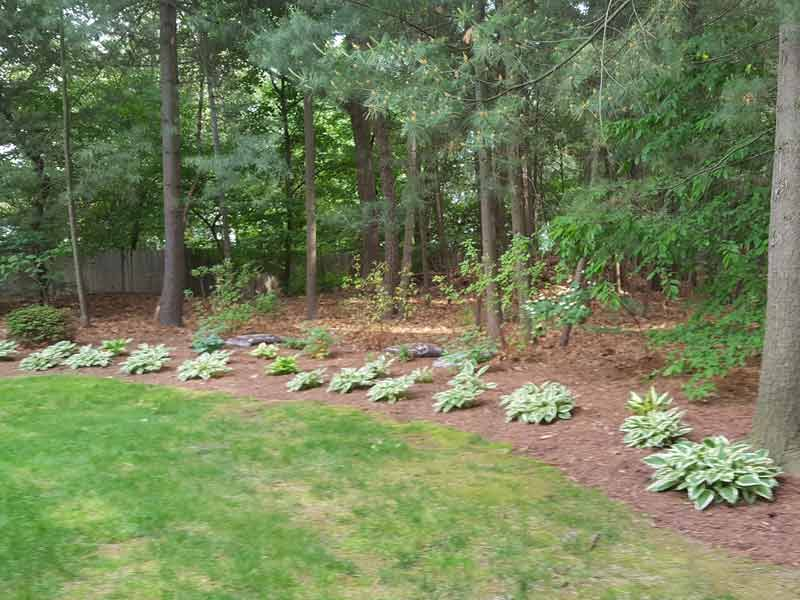 Plantings Along the Woods