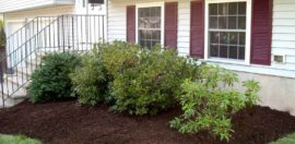 Encore Landscaping Residential Landscaping - John D. - After