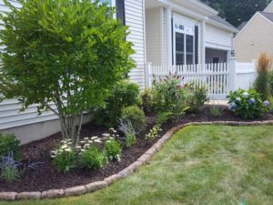 Encore Landscaping - foundation plantings